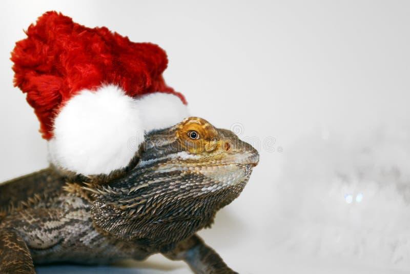 Kerstmis van het huisdier royalty-vrije stock afbeelding