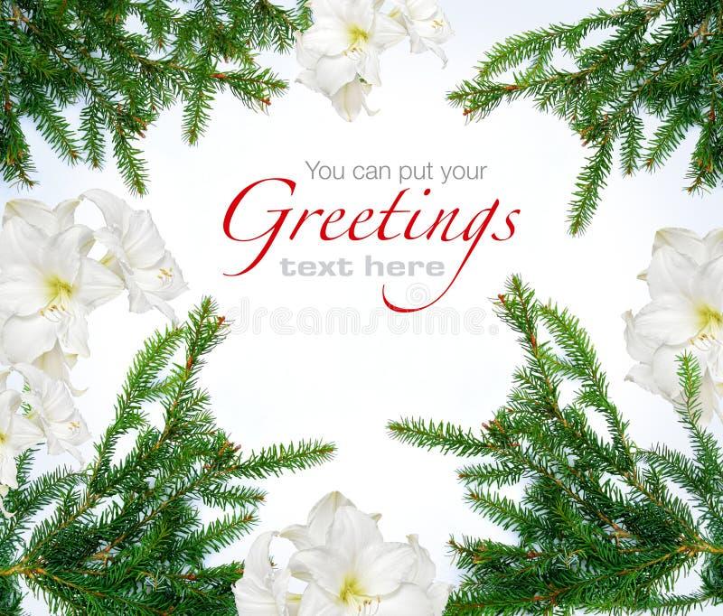 Kerstmis vertakt zich amaryllisbloemen royalty-vrije stock afbeeldingen
