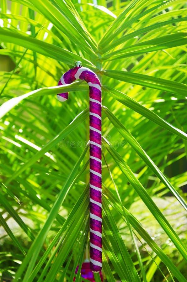 Kerstmisbal op palm royalty-vrije stock foto