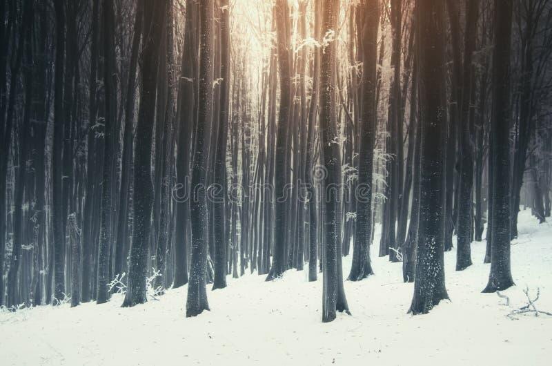 Kerstmisdag bevroren boszonsopgang royalty-vrije stock fotografie