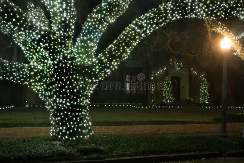 Kerstmisdecor op de boom De winter, Nacht, Houston, Texas, de V.S. stock afbeelding
