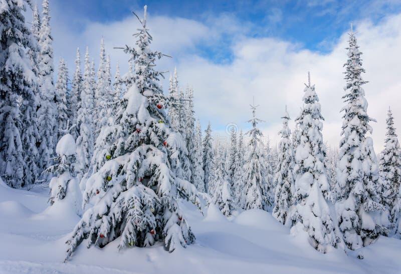 Kerstmisdecoratie op sneeuw behandelde pijnboombomen in het bos royalty-vrije stock afbeelding