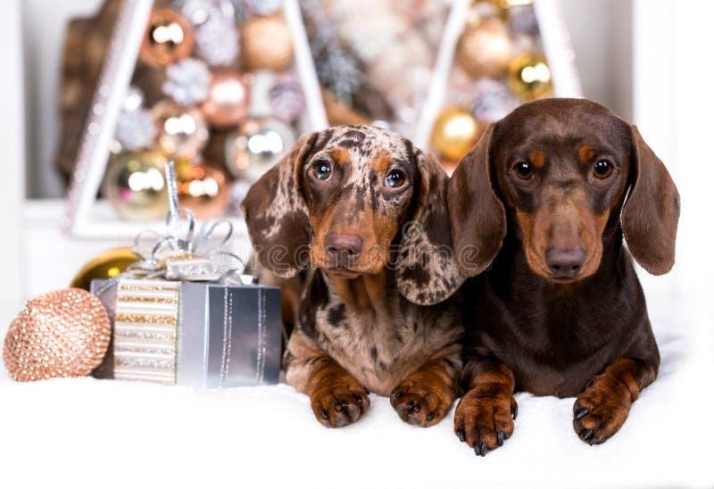 Kerstmishond van de puppytekkel stock afbeeldingen