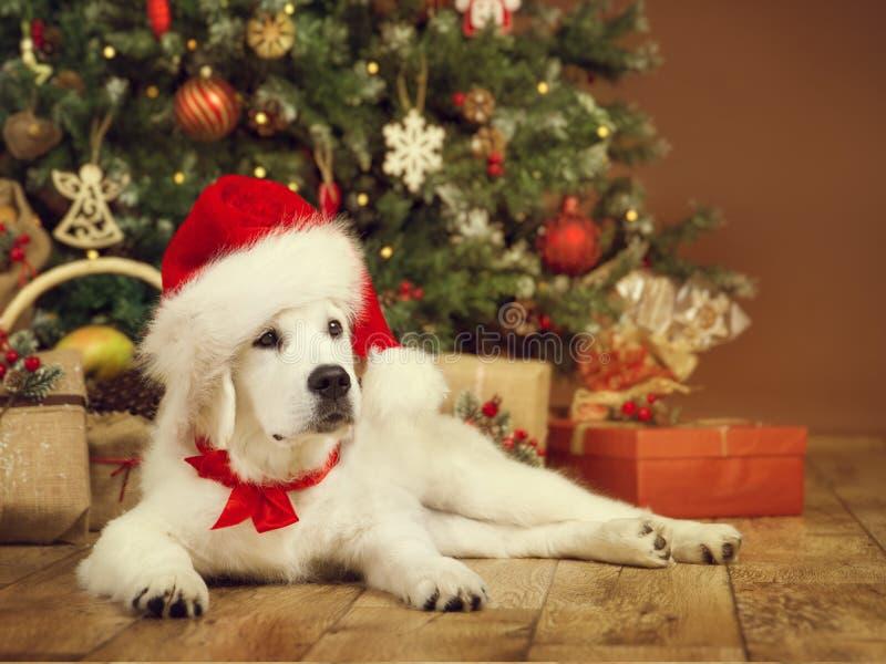 Kerstmishond, witte puppyretriever in santahoed, Kerstmisboom royalty-vrije stock foto's
