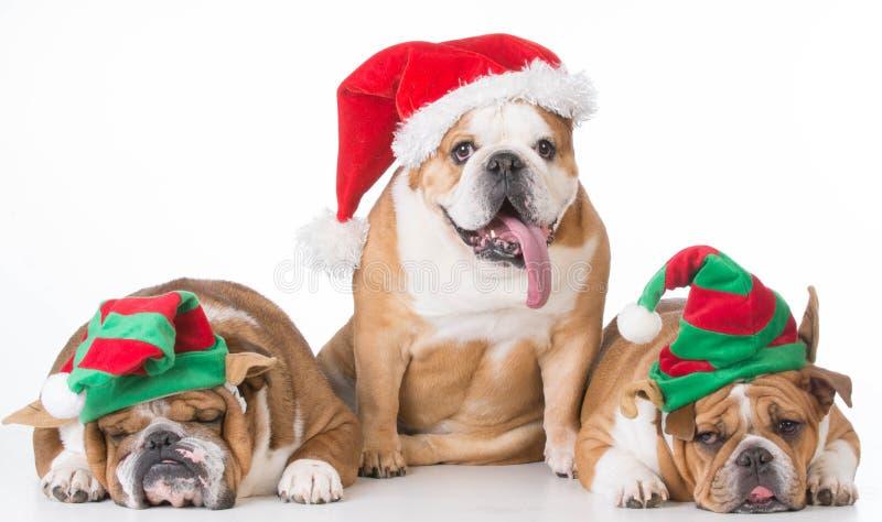 Kerstmishonden stock foto's