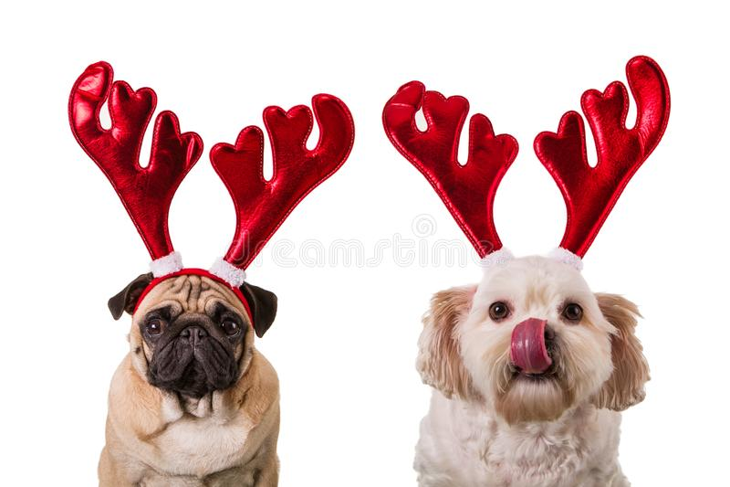 Kerstmishonden met hertengeweitakken stock afbeeldingen
