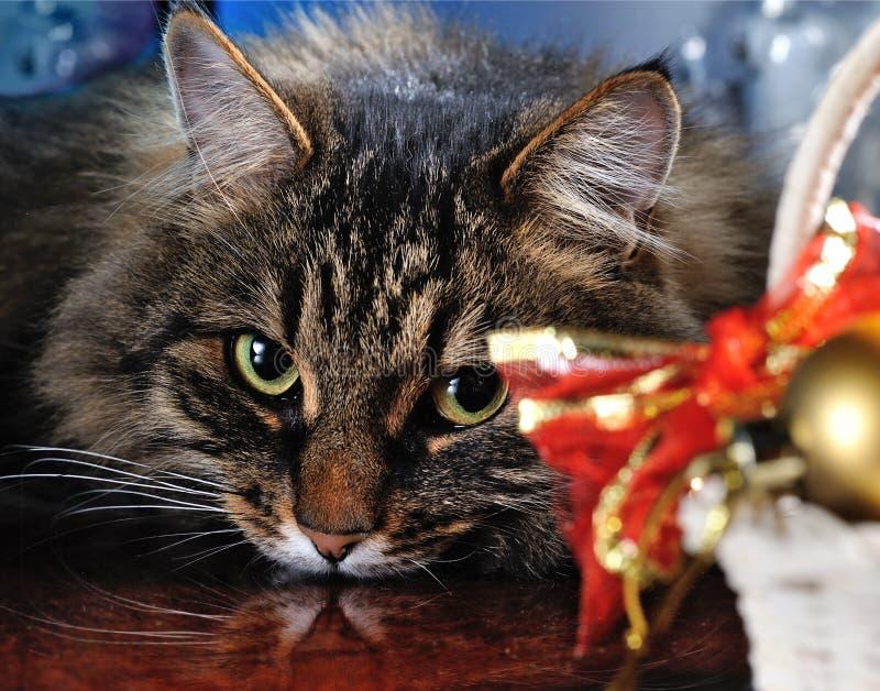 Kerstmiskat stock afbeeldingen