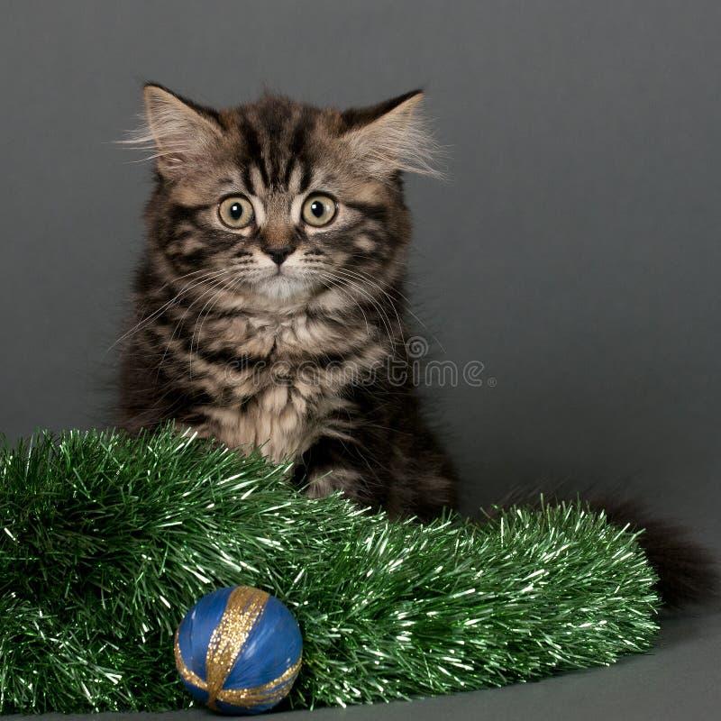 Kerstmiskatje stock foto's