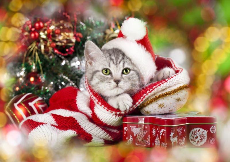 Kerstmiskatje royalty-vrije stock fotografie