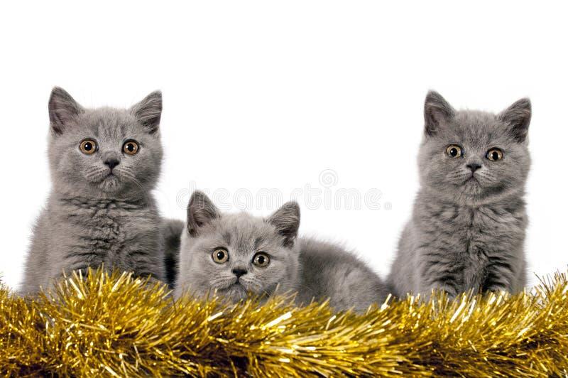 Kerstmiskatjes stock foto