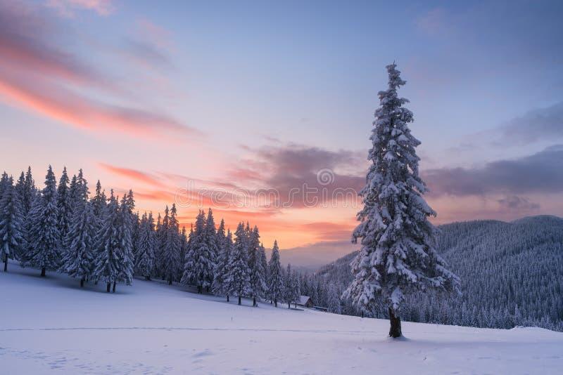 Kerstmislandschap met spar in de sneeuw en huis in m royalty-vrije stock afbeeldingen