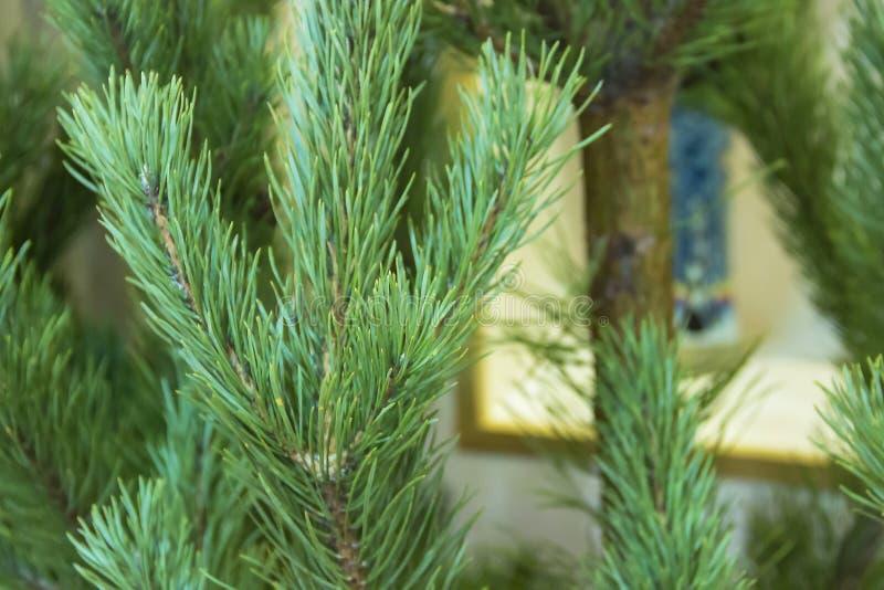 Kerstmislichten die in een mooie boom hangen royalty-vrije stock foto's
