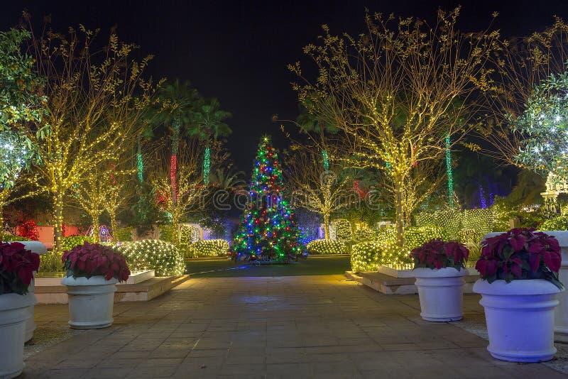Kerstmislichten en Boom stock foto's