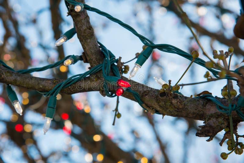 Kerstmislichten rond een boomtak die worden verpakt royalty-vrije stock fotografie