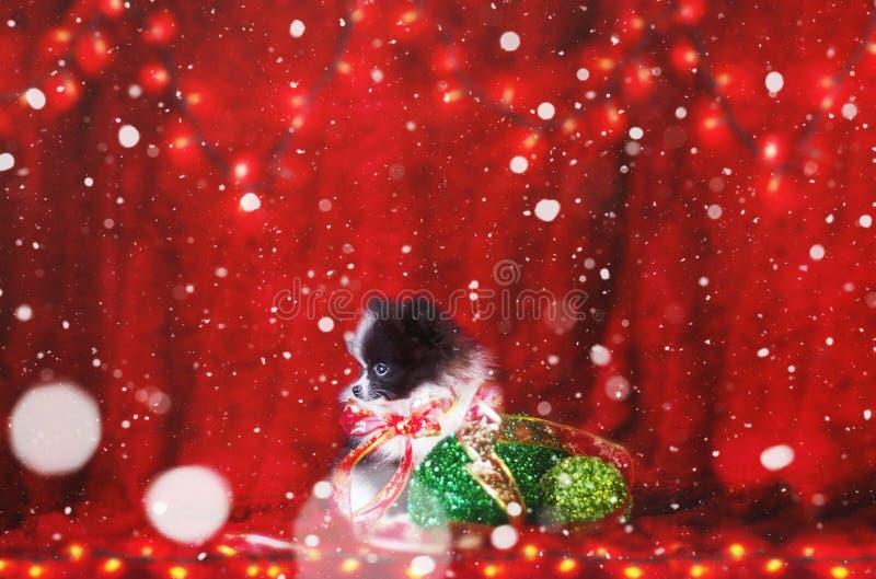 Kerstmispuppy met dalende sneeuw royalty-vrije stock afbeelding
