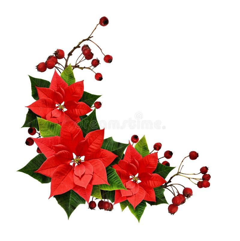 Kerstmisregeling met bessen en ponsettiabloemen royalty-vrije stock foto's