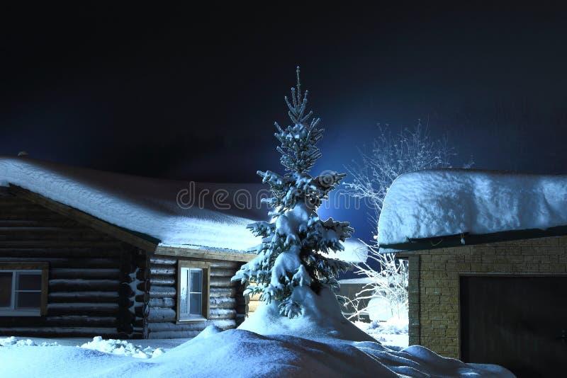 Kerstmisspar in de sneeuwwinter royalty-vrije stock afbeelding