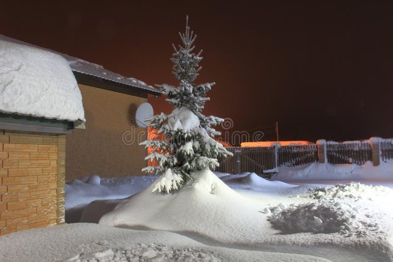 Kerstmisspar in de sneeuwwinter stock fotografie