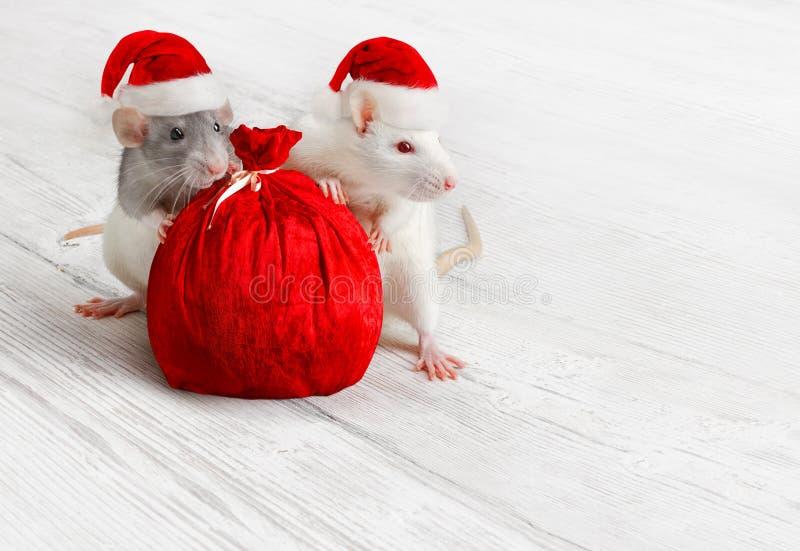 kerstritten met kerstcadeau, nieuwjaarsdieren met zak in Red Hat royalty-vrije stock afbeelding