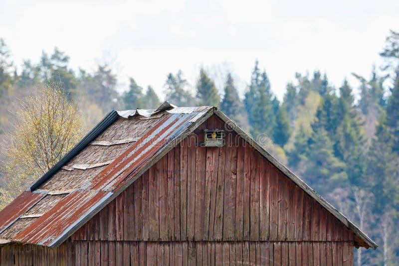Kestrel in a nesting box royalty free stock image