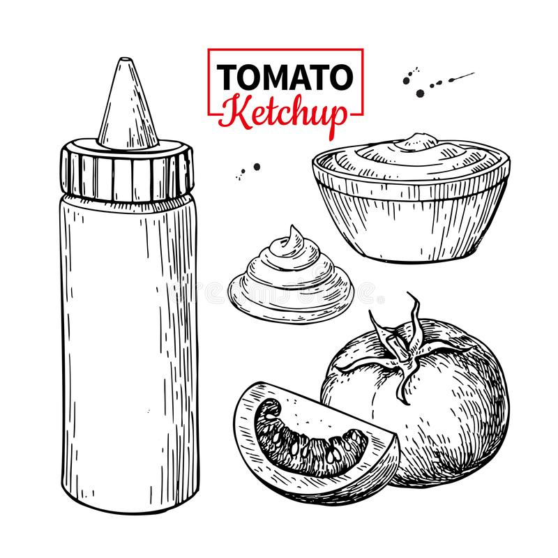 Ketchup sauce bottle with tomatoes. Vector drawing. Food flavor. In plastic container and bowl. Vintage engraved illustration isolated on white background stock illustration