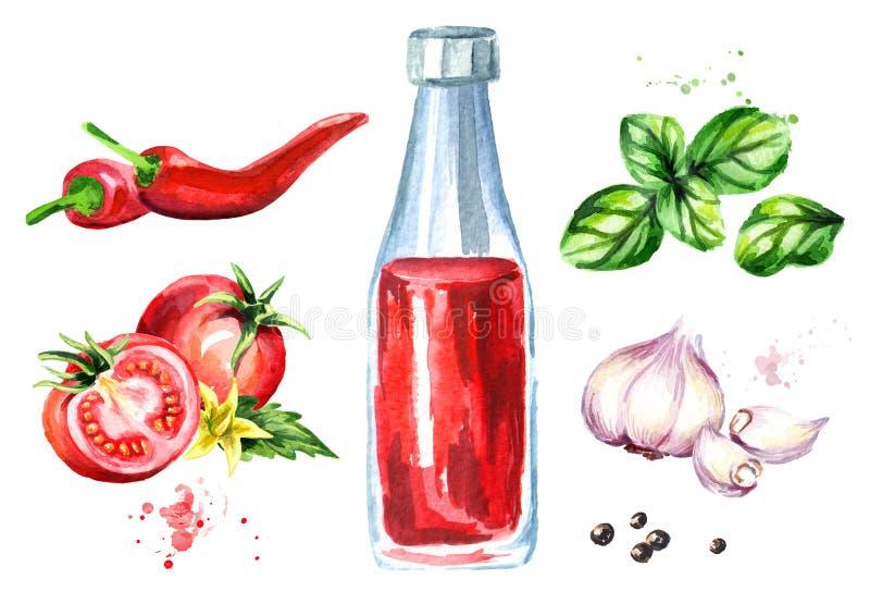 Ketchup ustawiający z pomidorem, czosnkiem, chili, czarnym pieprzem i basilem, Akwareli ręka rysująca ilustracja, odizolowywająca ilustracja wektor