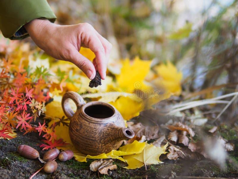 Ketel op de achtergrond van de herfst geel gebladerte stock afbeelding