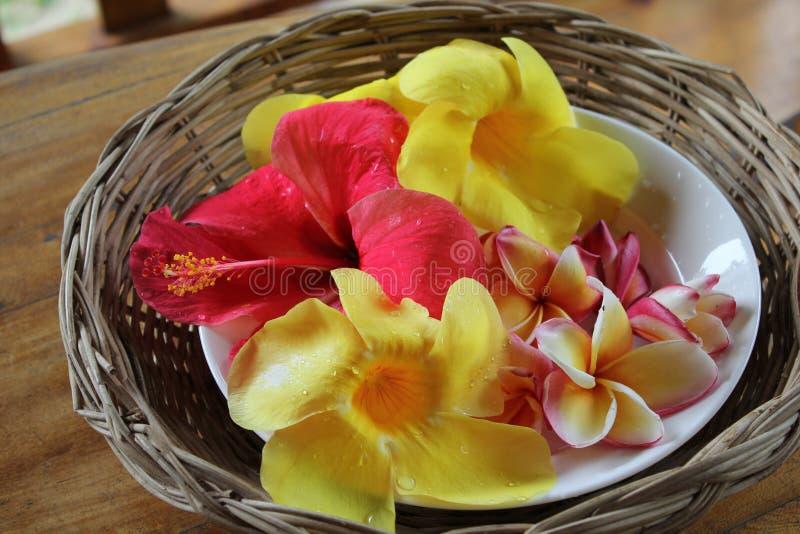 Ketmie et fleurs tropicales photo stock