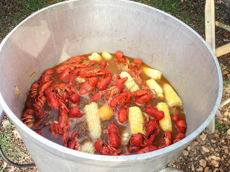 Kettle full of crawfish at a crawfish boil royalty free stock photography