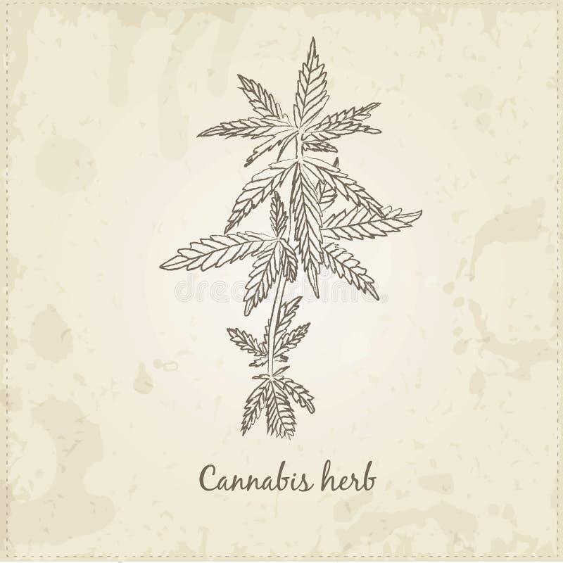Keuken hand-drawn kruiden en kruiden, Cannabiskruid stock illustratie