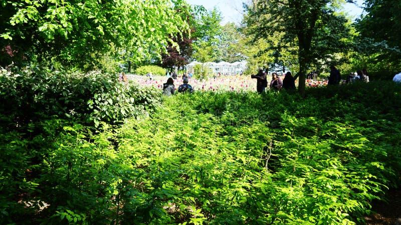 keukenhof, die Niederlande, Holland; 11/05/2019: Betäubungsfrühlingslandschaft, berühmter Keukenhof-Garten mit bunten frischen Tu lizenzfreie stockfotografie