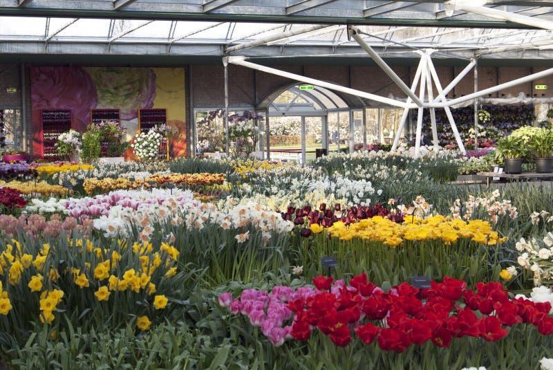 Keukenhof flowerpark royalty-vrije stock foto's