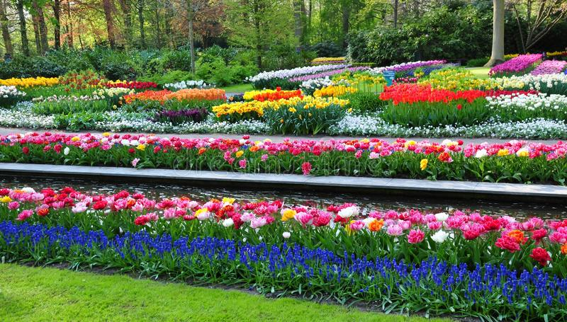 Keukenhof Garden known as the Garden of Europe, is one of the world`s largest flower gardens, situated in Lisse, Netherlands. The ornamental flower Garden in royalty free stock image