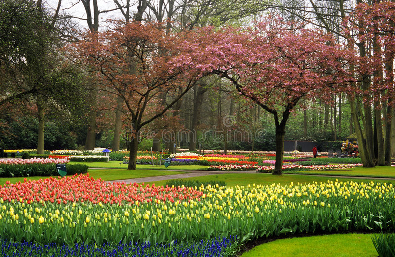 Keukenhof Gardens stock photos