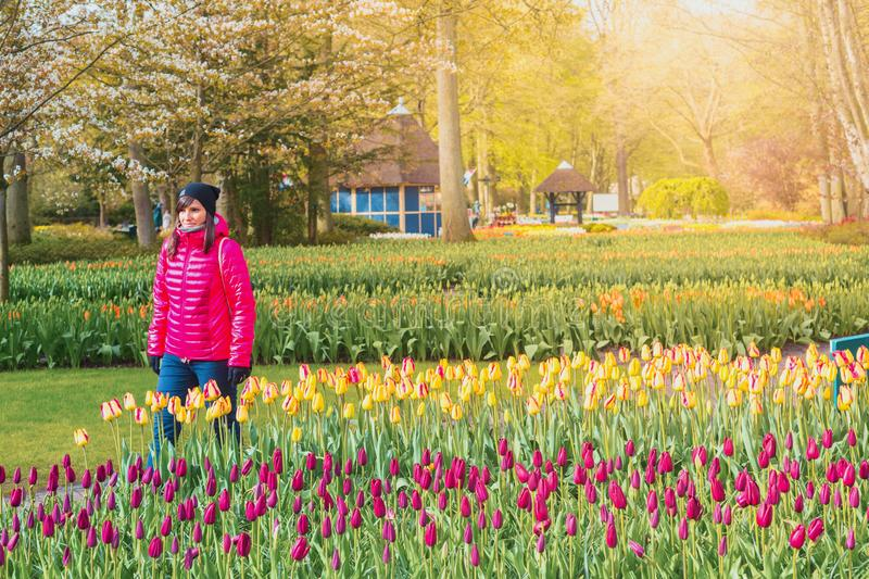 Keukenhof Gardens full of flowers, Netherlands stock photography