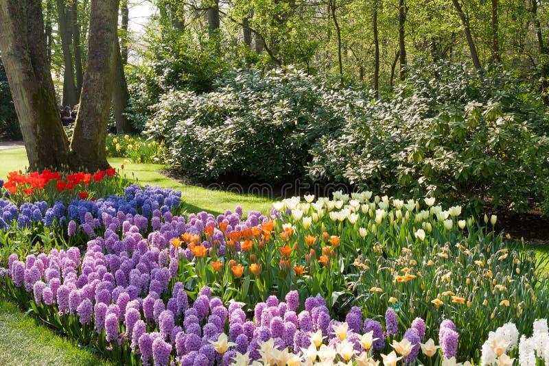 Keukenhof, Holenderski Jawny wiosna kwiatów ogród obraz royalty free
