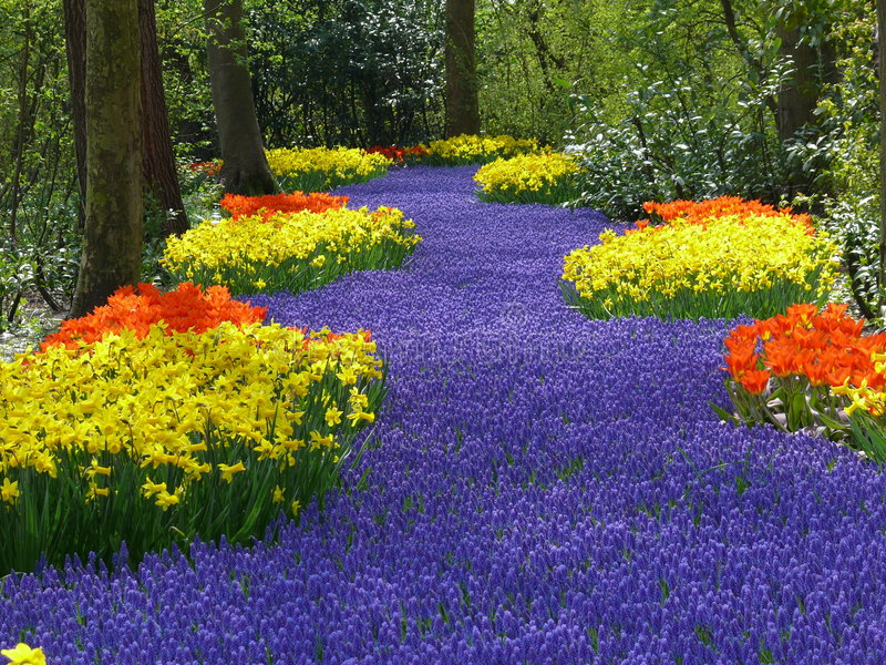 Keukenhof, Holland. During April, 2008. This is the peak of this park stock photo