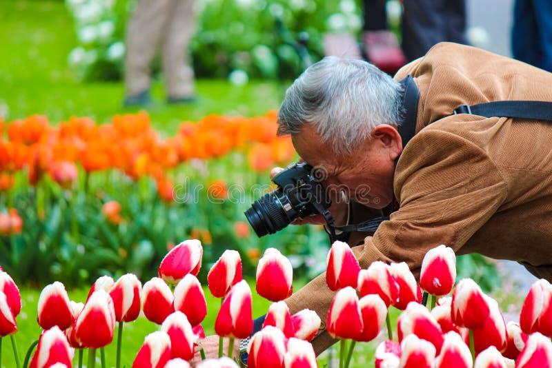 Keukenhof, Lisse, Nederland - 28 April 2019: De oudere Aziatische bloem van de de holdingstulp van de toeristenfotograaf en het n stock afbeeldingen