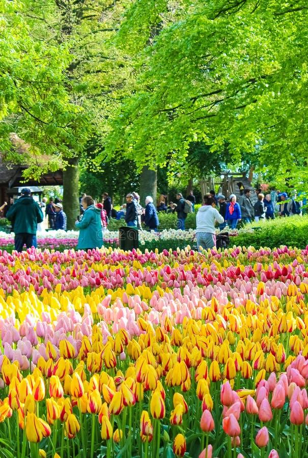 Keukenhof, Lisse, Netherlands - Apr 28th 2019: Vertical photo capturing multi-colored tulips in famous Dutch Keukenhof gardens. Visitors in background. Major stock photos