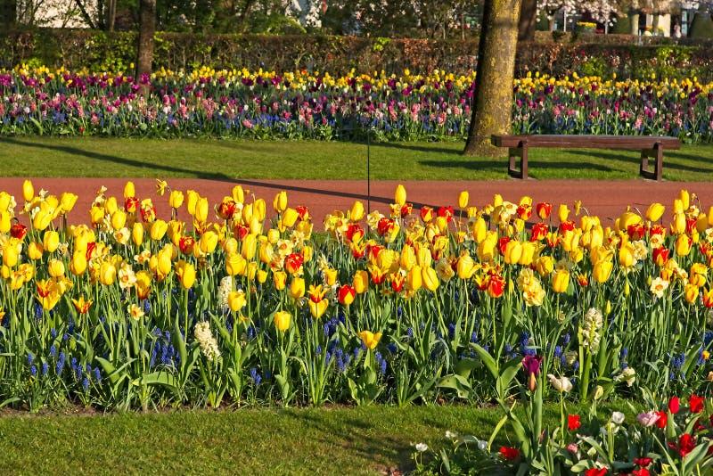 KEUKENHOF, LISSE, NETHERLANDS - MARCH 19, 2019 - Bench at flower gardens. KEUKENHOF, LISSE, NETHERLANDS - MARCH 19, 2019 - Empty bench at flower gardens with lot stock images