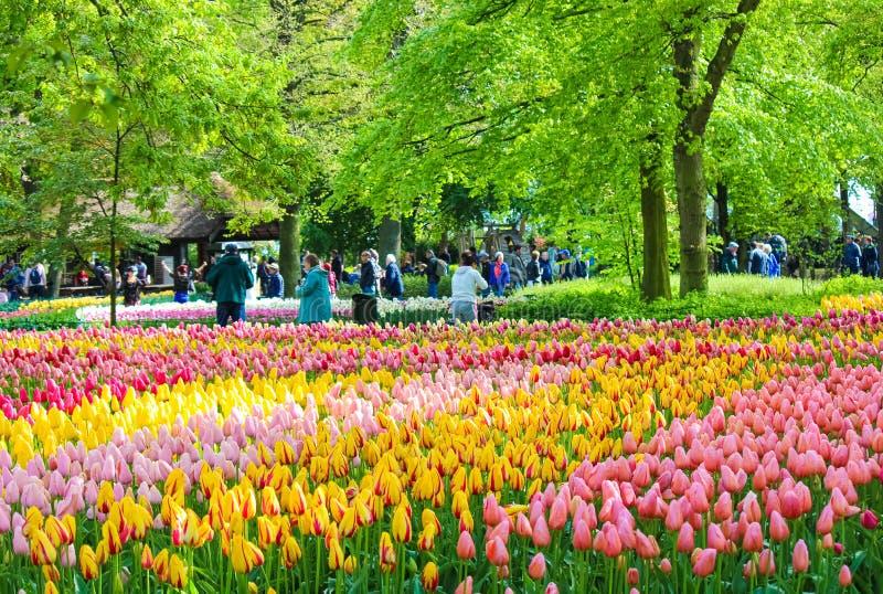 Keukenhof, Lisse, Países Bajos - 28 de abril de 2019: Cama que sorprende de flores con los tulipanes coloridos en los jardines fa imagen de archivo