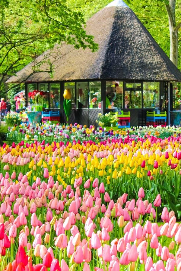Keukenhof, Lisse, Países Bajos - 28 de abril de 2019: Jardines de Keukenhof que sorprenden con los tulipanes coloridos típicos El imágenes de archivo libres de regalías