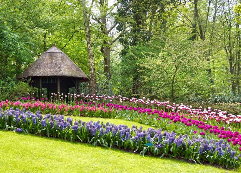 Download Keukenhof Nederländerna arkivfoto. Bild av trees, hyacint - 27283714