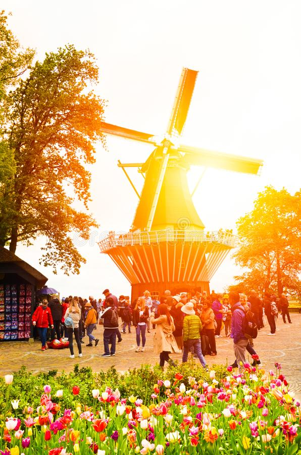 Keukenhof, Netherlands - Colorful tulips with windmill in the background and tourists walking in the gardens. Taken against orange royalty free stock photography