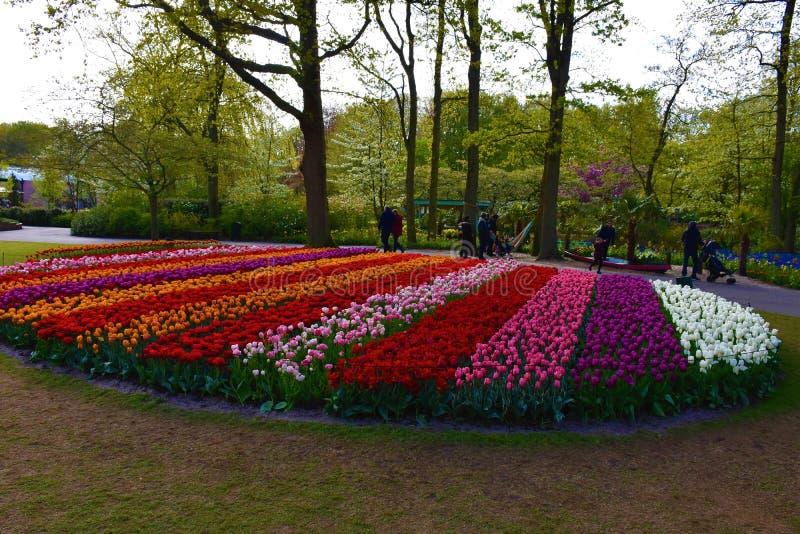 Keukenhof ogródy z tulipanów kwiatami fotografia stock