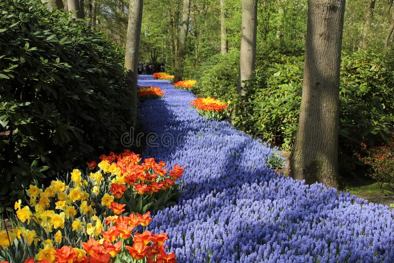 Keukenhof gardens. Tulips macro photo stock images