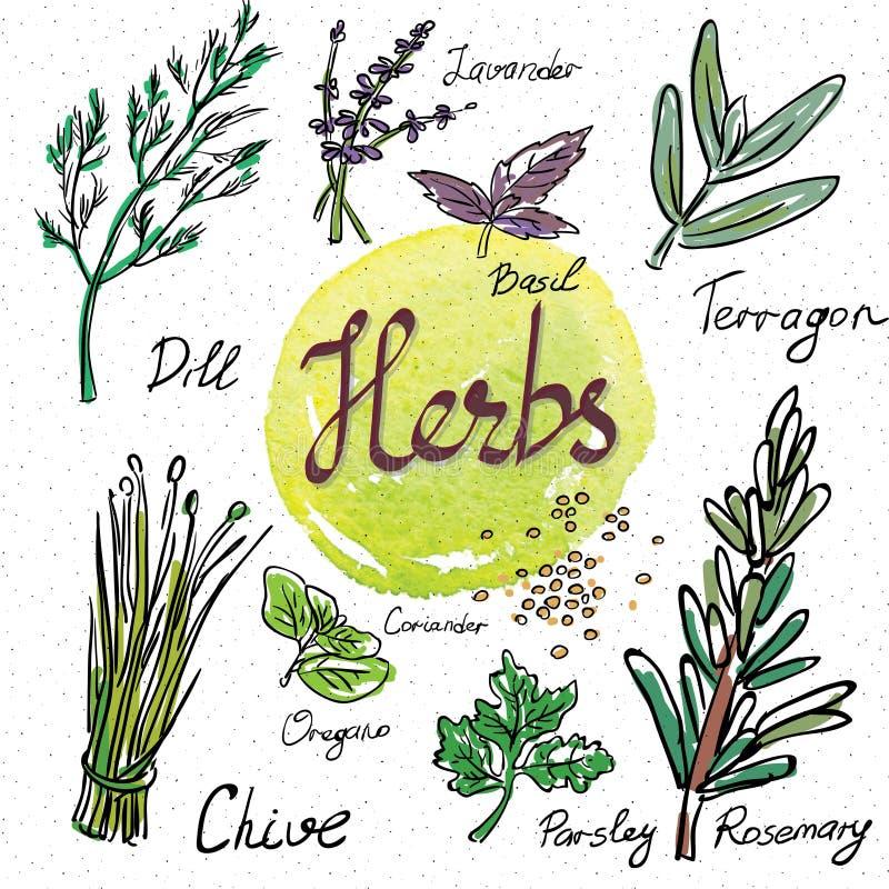 Keukenkruiden en kruiden Hand Getrokken Schetspictogrammen stock illustratie