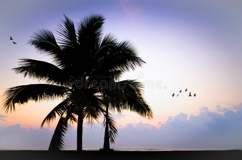 Keurige boom het strand royalty-vrije stock foto's