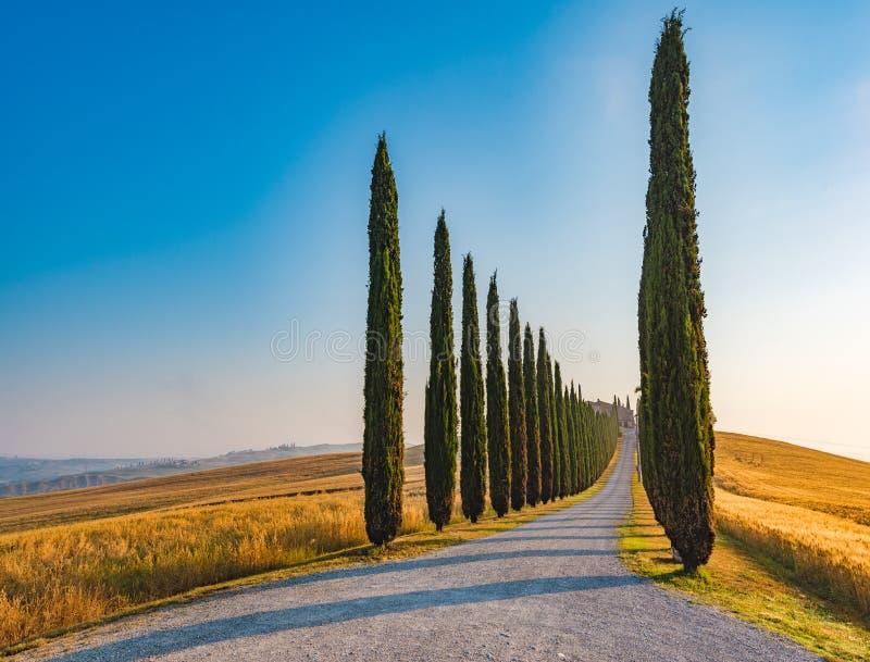 Keurige rijen en schaduwen van de cipressen, beroemde Toscaanse bomen stock afbeelding