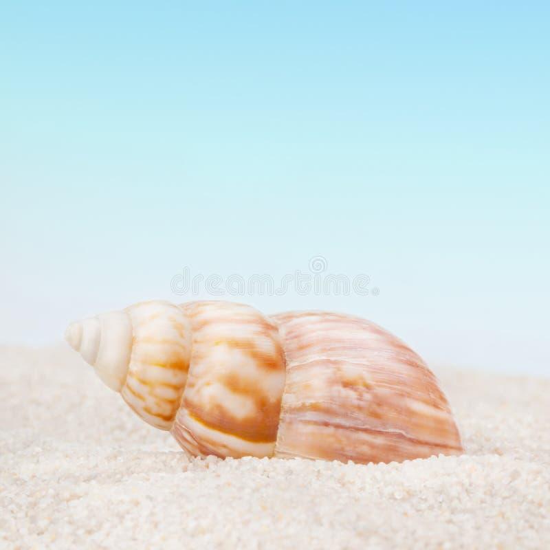 Keurige zeeschelp op het zandige strand stock foto's
